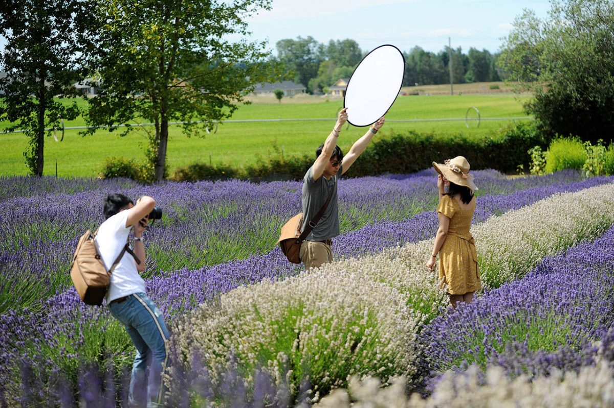Photography at Lavender Farms