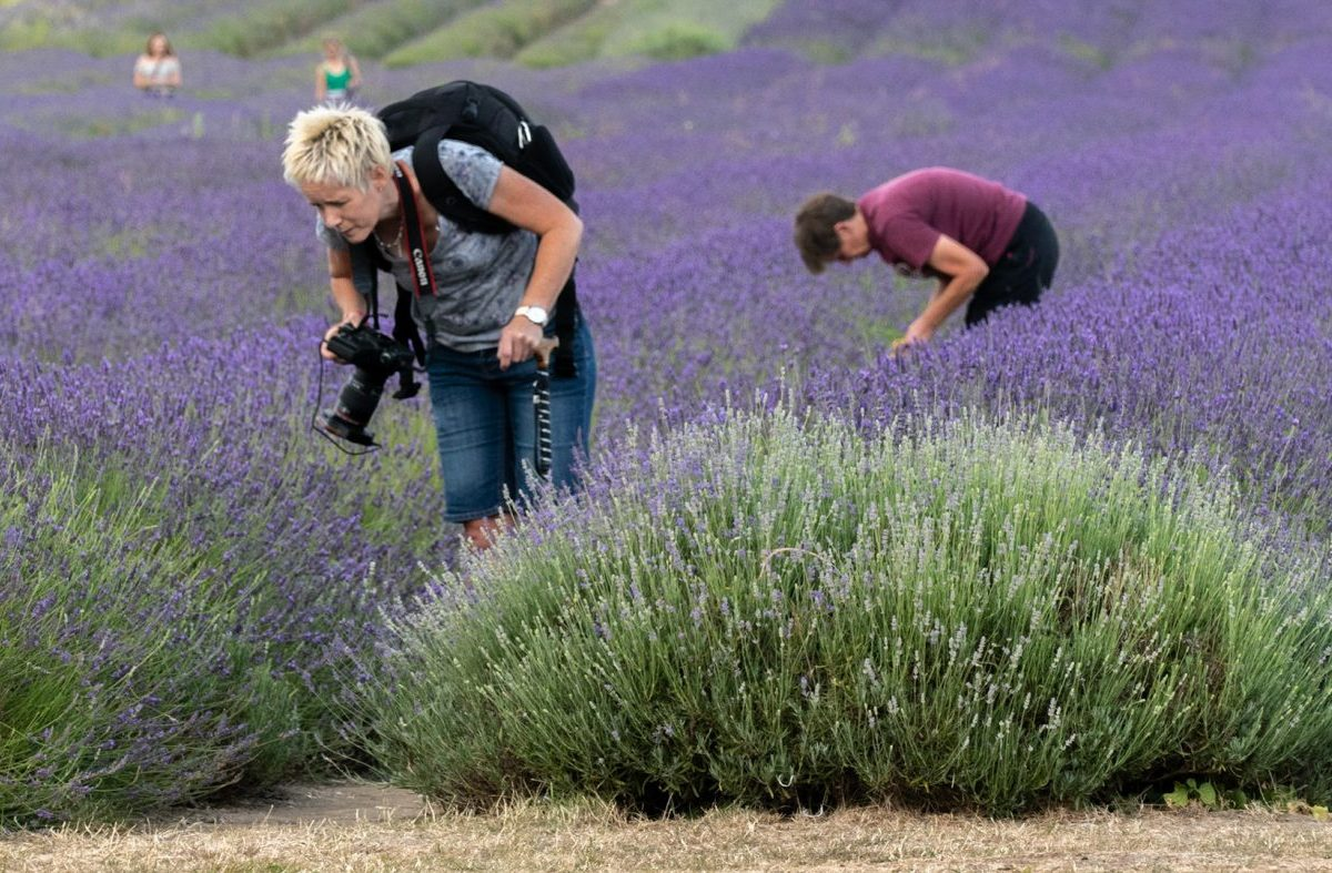 Activities at Lavender Farm
