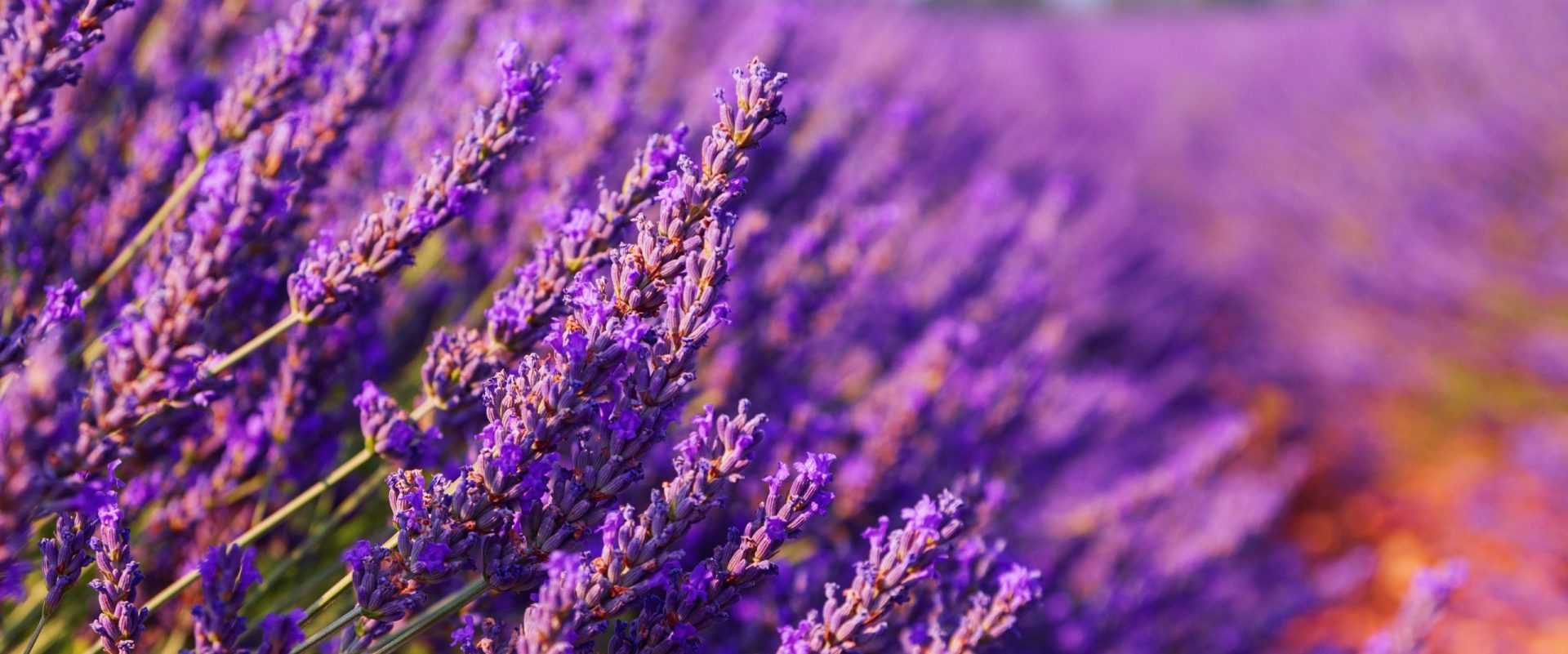 Flower Essences Added to Other Treatments: Combining Healing Methods and Modalities Brings Out the Best Results