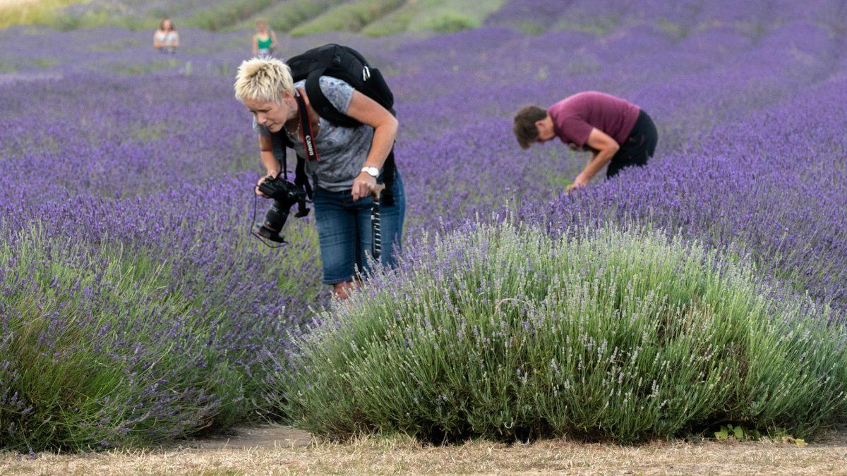 Activities at Lavender Farm