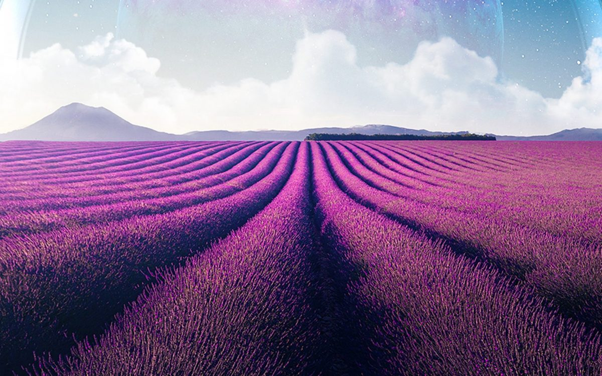 Excitings Tour at Our Lavender Farm This Summer!