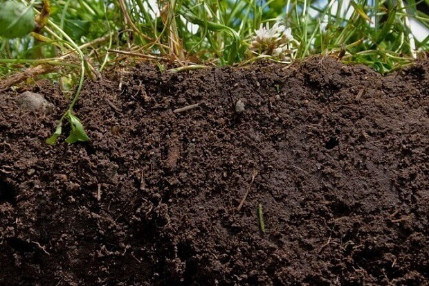 Living Soil: A Natural Method for Turning Any Dirt to Soil